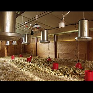 chauffage infrarouge batiment élevage - Cerem infraconic ®